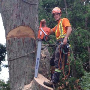 Owen Sound Tree Removal