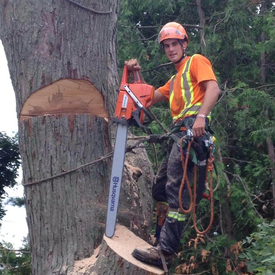 Owen Sound Tree Removal