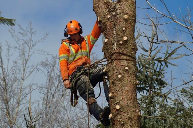 Matt Beckett cutting tree